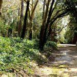 Património termal das Caldas da Rainha, Mata Rainha Dona Leonor, Gocaldas, o teu Guia Turístico Local