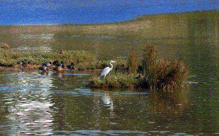 Lagoa de Óbidos, Nadadouro