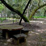Mata Rainha Dona Leonor, Caldas da Rainha, área de picnic, Gocaldas, o teu Guia Turístico Local