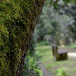Mata Rainha Dona Leonor, Caldas da Rainha, Gocaldas, o teu Guia Turístico Local