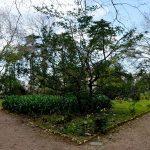 Mata Rainha Dona Leonor, Caldas da Rainha, Jardim da Rainha, Gocaldas, o teu Guia Turístico Local
