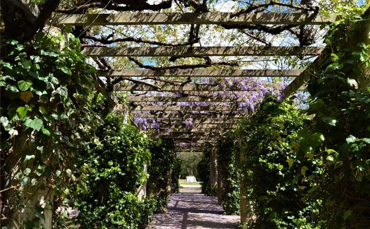 Parque D. Carlos I, flora, Caldas da Rainha, , Gocaldas, o teu Guia Turístico Local