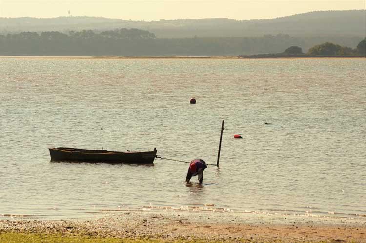 Mariscadores na Lagoa de Óbidos