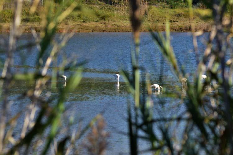 Lagoa de Óbidos, Birdwatching, Caldas da Rainha, GoCaldas o Guia Oficial da cidade