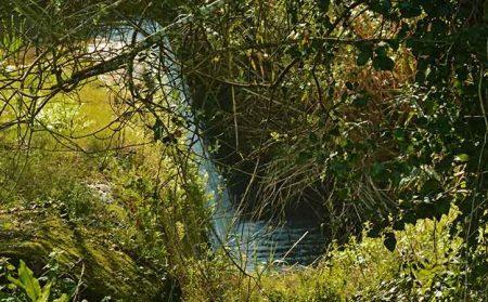 Mata das Mestras em Carvalhal Benfeito, Caldas da Rainha