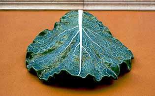 ;useu da Cerâmica em Caldas da Rainha GoCaldas Caldas da Rainha - O Guia Turístico da Cidade
