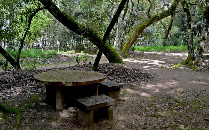 D. Leonor Wood, Caldas da Rainha Thermal heritage , picnic area,Gocaldas, your Local Touristic Guide