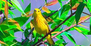 Ornithological Exhibition